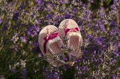 Babyschuhe auf einem Lavendel halten auf einem Gebiet auf Stockfotos