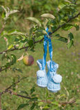 Hand Knitted baby shoes. Wollen babyshoes hanging from an apple tree Stock Photo
