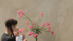 Babysitter with baby girl with rosebush stock video footage
