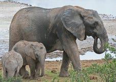 Babysitting Elefant Stockfotografie