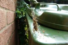 Babyspinnen op het Web Stock Afbeeldingen
