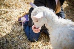 babyvoer met jong geitje Royalty-vrije Stock Foto