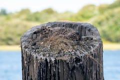 Babyzeemeeuw in een nest royalty-vrije stock foto's