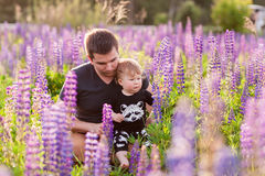 Babyzoon met papa op lupinegebied Stock Afbeelding