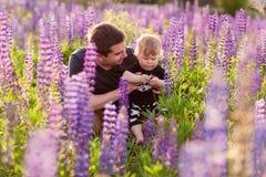 Babyzoon met papa op lupinegebied Stock Foto