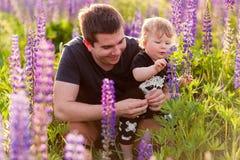 Babyzoon met papa op lupinegebied Royalty-vrije Stock Foto's