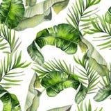 Bac цветочного узора джунглей красивой акварели безшовный тропический Стоковые Изображения RF