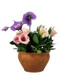 bac de fleur photo libre de droits