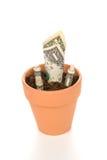 Bac de fleur d'argile avec l'élevage d'argent comptant Photos libres de droits