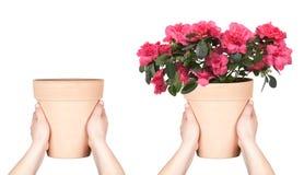 Bac de fleur de subsistance de mains Photographie stock libre de droits