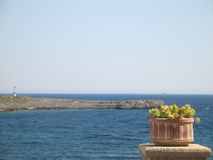 Bac de fleur et la mer Image libre de droits