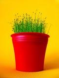 bac de fleur rouge avec la ciboulette photographie stock libre de droits