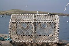 Bac de langoustine Photographie stock