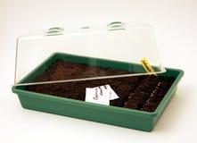 Bac pour l'ensemencement de graines Photographie stock libre de droits