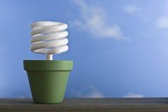 Bac simple de pousse de CFL Photographie stock libre de droits