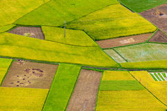 Bac Son rice field Royalty Free Stock Photography