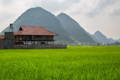 Bac Son valley, Lang Son, Vietnam. Rice field in valley around with mountain panorama view in Bac Son valley, Lang Son, Vietnam royalty free stock photo