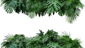 BAC tropicale della natura di disposizione floreale del cespuglio della pianta del fogliame delle foglie fotografia stock