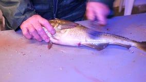 Bacalao, el bacalao Retiro rápido de escalas con un cepillo de alambre en una tabla de ficheros Vista de las manos masculinas fue metrajes