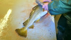 Bacalao, el bacalao Retiro rápido de escalas con un cepillo de alambre en una tabla de ficheros Vista de las manos masculinas fue almacen de video