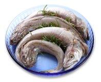 Bacalhau cru Imagens de Stock Royalty Free