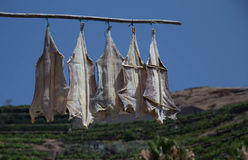 Bacalhau słony dorsz od Portugalia obrazy royalty free