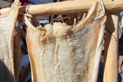 Bacalhau salgado de Lofoten Fotografia de Stock Royalty Free