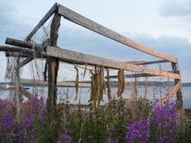 Bacalhau seco Foto de Stock