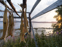 Bacalhau seco Imagem de Stock Royalty Free