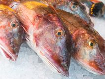 Bacamarte vermelho para o leste atlântico para a venda em um mercado de peixes Fotos de Stock Royalty Free