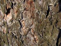 BacBackground bild av den rynkiga texturen av skället av det gamla trädet som fotograferas, som du att närma sig Royaltyfria Foton