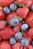 Bacca Berrylicious 1 Fotografia Stock
