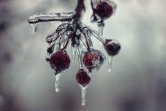Bacca congelata fotografie stock libere da diritti