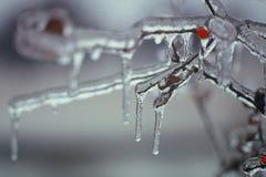 Bacca congelata fotografia stock
