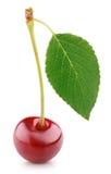 Bacca della ciliegia con la foglia isolata su bianco Fotografia Stock Libera da Diritti