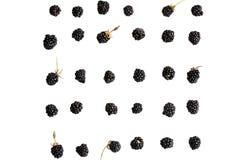 Bacca di Blackberry su un fondo bianco Fotografia Stock Libera da Diritti