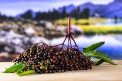 Bacca di sambuco nera europea fresca con il lago dietro immagine stock
