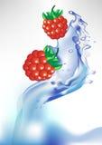 Bacca fresca nella spruzzata dell'acqua Immagini Stock Libere da Diritti