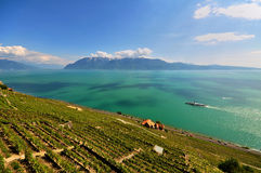 Bacca Leman - Svizzera Fotografia Stock Libera da Diritti