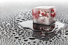 Bacca nel ghiaccio (viburno) Immagini Stock