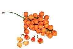 Baccaurea kunstleri owoc odizolowywająca na bielu zdjęcie royalty free