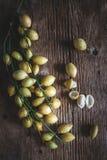 Baccaurea ramifloras Arkivbilder
