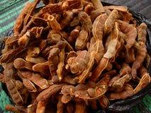 Baccelli asciutti del tamarindo Fotografie Stock Libere da Diritti