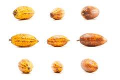 Baccelli del cacao su bianco Fotografia Stock Libera da Diritti