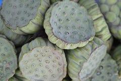 Baccelli del loto Immagini Stock