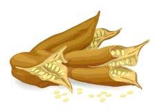 Baccelli del sesamo. Fotografie Stock Libere da Diritti
