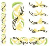 Baccelli della vaniglia con i fiori e le foglie Fotografia Stock