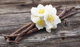 Baccelli della vaniglia con il gelsomino immagini stock