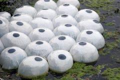 Baccelli di plastica di vita della pianta Immagine Stock