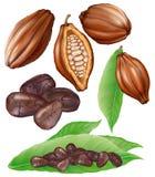 Baccelli e grani del cacao Fotografia Stock